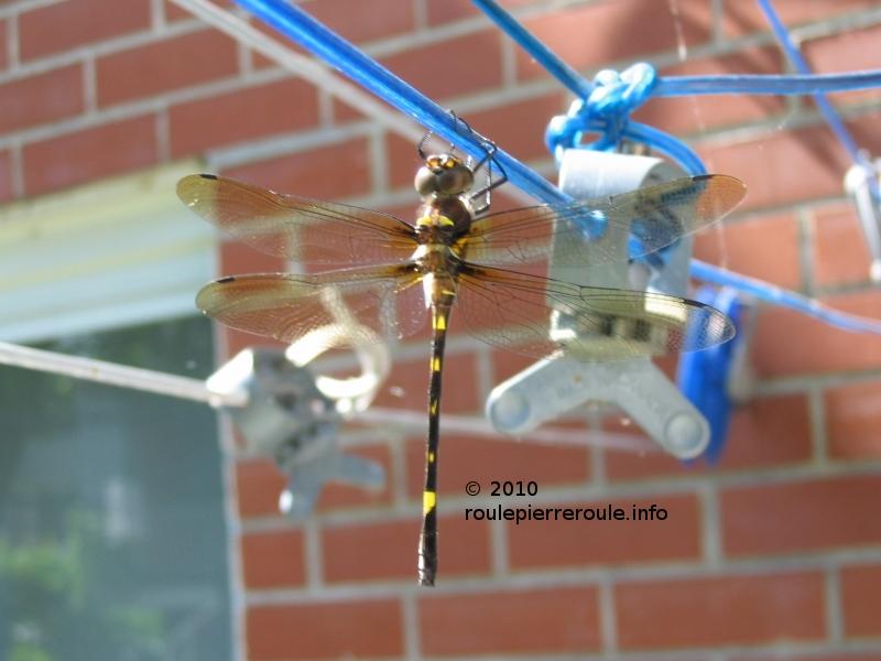 La belle libellule le blogue de pierre le grand - Corde a linge installation ...